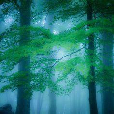 Wald und Wetter 02 – Bäume, Ebenen, Tiefe, Nebel. Die kurze Schärfe der Bilder zeigt auf einzelne Exemplare mit dem Finger. So sieht man Bäume vor lauter Wald. 2014, MD   © www.piqt.de   #PIQT