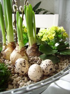 Quail Eggs; I love these. Boil in salt water with a splash of vinegar so you can peel them easily.