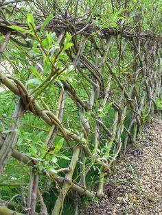 Živý plot vytvarovaný podľa na konštrukcii