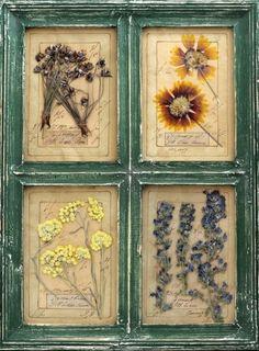 Милые сердцу штучки: Картины-гербарии в стиле Прованс