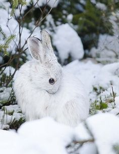 Winter Bunny Amazing World beautiful amazing