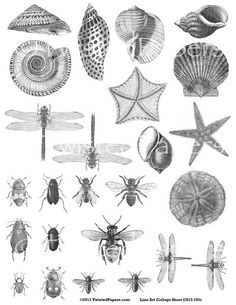 BUGS SHELLS. Mixed Media and Steampunk Art, Digital Victorian Line Art Illustrations Collage Sheet in both jpg and png files, cs13-195r