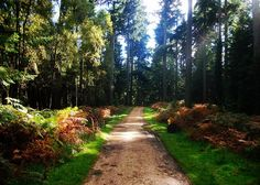 Image: New Forest (England, UK) bymr.southamptonvia Flickr England is home to some fantastic landscapes including areas with a high density of trees that we know fondly as enchanting forests. Steeped in history and legend, forests are wonderful places to spend time – whether for a Sunday ...
