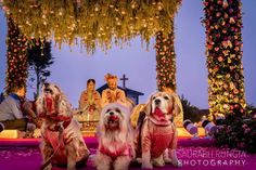 A Charming Hill-side Wedding With Stunning Outfits And Spring Colors! Indian Wedding Planning, Wedding Planning Websites, Wedding Mandap, Desi Wedding, Indian Wedding Decorations, Indian Weddings, Indian Wedding Photography, Spring Colors, Bridal Portraits