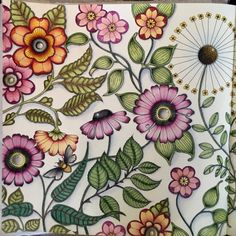 Johanna Basford | Picture by Robyn Lipner | Colouring Gallery