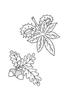 Coloriage d'une feuille de marronnier et d'une feuille de chêne avec leurs fruits