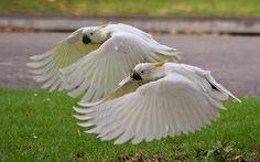 Urban wildlife | Flickr - Photo Sharing!
