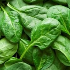 Organic Renegade F-1 Spinach Seeds