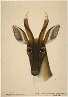 Rare wildlife Illustrations from The British Library