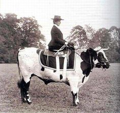 "That's one way to ride side saddle. "" NO BULL "" wanted to be a horse when he grew up ;-}"
