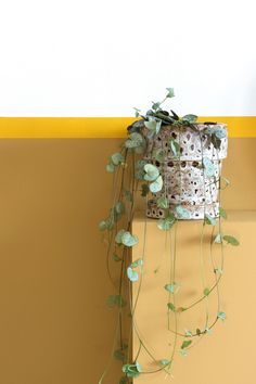 Imagine when the sun, a candle or a light is shining on it and your room turns into a plant disco. Green Garden, Green Plants, House Of Leaves, All About Plants, Home Trends, Outdoor Plants, Home Office Design, Container Plants, Room Colors