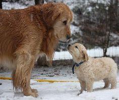 making a new friend