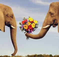 Cute pic of romantic elephant :-) #animal #photo #flowers