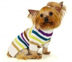 Do Dogs Really Need Sweaters or Hoodies?     http://chezchazz.hubpages.com/hub/sweaters-and-hoodies-for-dogs