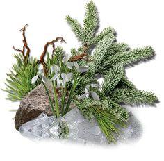 Blog, Plants, Blogging, Flora, Plant, Planting