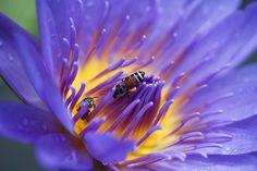 En güzel dekorasyon paylaşımları için Kadinika.com #kadinika #dekorasyon #decoration #woman #women Beautiful purple lotus flower.