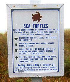 Sea turtles nest on the beaches of Sarasota County from May 1 - October 31. Nokomis Beach, Caspersen Beach, Mansota Key, Siesta Key, Nokomis Beach, Turtle Beach, Venice Beach, Venice, Florida