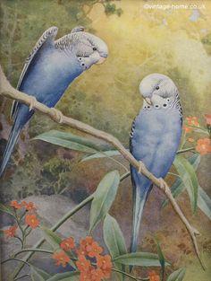 Vintage Home - 1930s Blue Budgerigars Print: www.vintage-home.co.uk