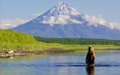 Bear and Volcano  http://shpilenok.livejournal.com/172466.html