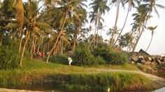 Meditativt yogaretræte i Kerala | 6. januar - 6. februar 2016 (Vælg 1-4 ugers ophold) - Meditativt yogaretræte i Inden, ved Varkala der byder på en af kystens skønneste sandstrande og er et godt sted at blive forkælet med massage og ayurvediske behandlinger på et af de mange ayurvedacentre.
