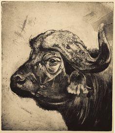 African Buffalo, Head Tattoos, Animal Heads, African Animals, Paintings For Sale, Lovers Art, Pet Birds, Printmaking, Buy Art