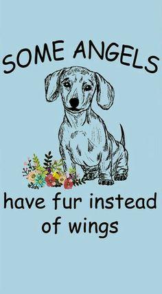6a3737e7288a8e Dachshund Shirt, Mini Dachshund, Daschund, Weenie Dogs, Pet Dogs, Doggies,