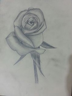 Рисунок карандашом (роза)