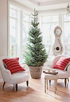 Árbol de Navidad - #Plantas típicas de #Navidad #Xmas