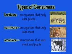 17 slide detailed presentation about food chains and food webs.  Links to interactive websites. Short quiz at the end. ...