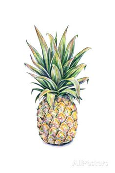 Pineapple on a White Background. Watercolor Illustration Prints by MargaritaSh at AllPosters.com