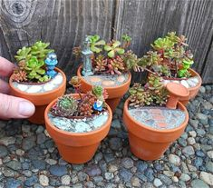 If you want an outdoor dollhouse and a mini garden rolled into one, a fairy garden is definitely a great idea to consider. There are many ways you can create a mini garden using any kind of contain… Terrarium Cactus, Garden Terrarium, Succulents Garden, Succulent Plants, Garden Planters, Potted Plants, Mini Fairy Garden, Fairy Garden Houses, Gnome Garden