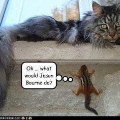 Laughing hysterically. . .