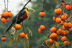 Tucano in the rain. Photo by Tom Dos Santos -- National Geographic Your Shot