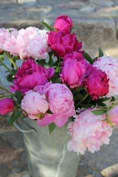 Red and pink peonies | Ana Rosa