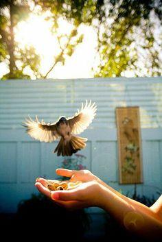 голубь, свобода, руки