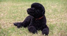 The White House revealed Monday that first dog Bo has been joined by another Portuguese Water Dog, this one named Sunny. View more photos here.