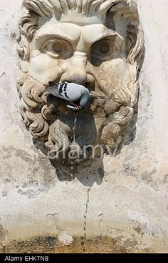 Drinking Pigeon in Rome Stock Photo