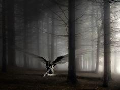 El amor, ángel terrible,  vive en esa distancia sin medida, donde habito desde que te has ido.  EC