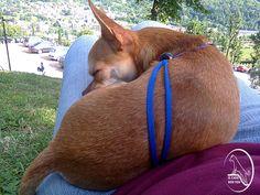 mantengo la mia pancetta il più morbido possibile per far riposare i cani più piccoli!!!! ;)