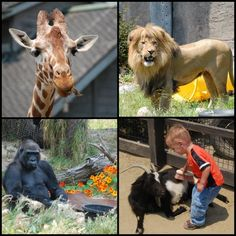 The Best Zoos in the West