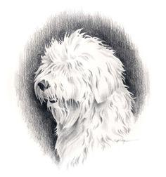 OLD ENGLISH SHEEPDOG Dog Pencil Drawing Art Print por k9artgallery