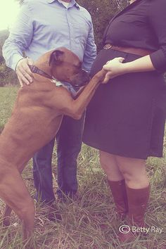 Maternity photos with Boxer, Betty Ray