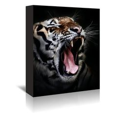 """East Urban Home 'Dangerous Tiger Wildcat' Photographic Print on Wrapped Canvas Size: 14"""" H x 11"""" W x 1.5"""" D"""