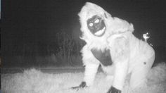 A remote camera set up in Kansas to photograph a suspected mountain lion instead spotted oddball characters in costume.