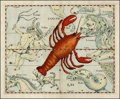 Cancer - Johannes Hevelius Firmamentum Sobiescianum sive Uranographia