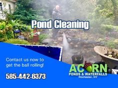 Read details about fish pond & water feature cleaning, maintenance & repair services in the Rochester (NY) area by Acorn Ponds & Waterfalls Pond Algae, Pond Cleaning, Pond Maintenance, Rochester New York, Pond Filters, Pond Water Features, Waterfall Fountain, Finger Lakes, Fish Ponds