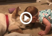 The little girl adores the dog, and she gives him kisses. The dog has a cute response Dog Bowls, San Antonio, Little Girls, Children, Kisses, Dogs, Hungary, Saint Antonio, Boys
