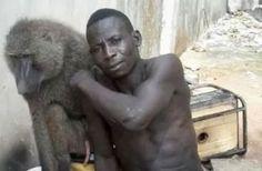 Cazuza: Criminosos usam babuínos em 'saidinha de banco'.