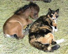 Very big cat.. or very tiny foal? Either way.. very cute!