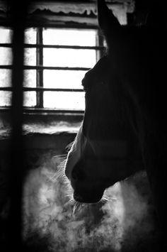 Сold breath by Nika Zaeva on 500px